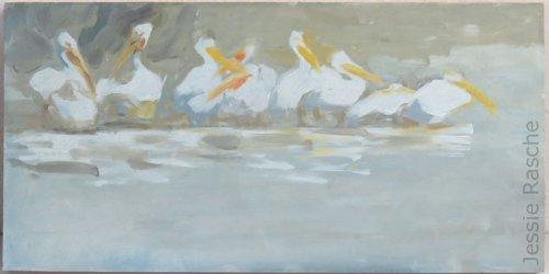 Midwestern Pelicans