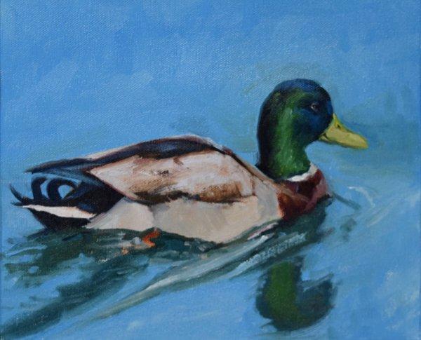 mallard oil painting alla prima