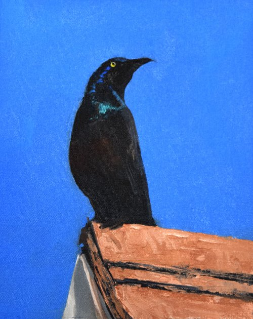 south dakota grackle bird oil painting
